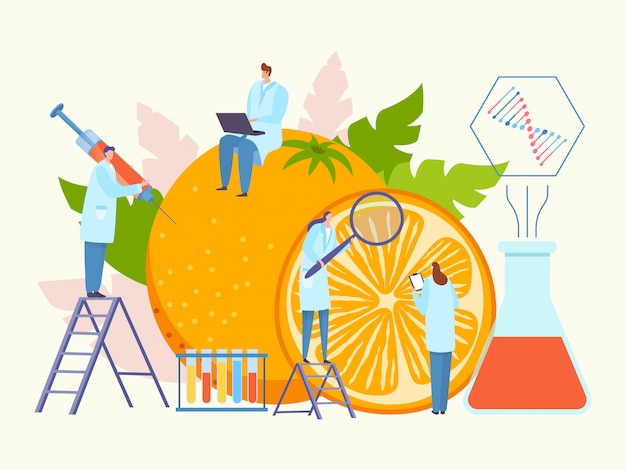 Bioengineering food, genetically modified product  illustration. sience organiv research with large orange. people character