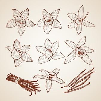 Biology aroma flower cinnamon