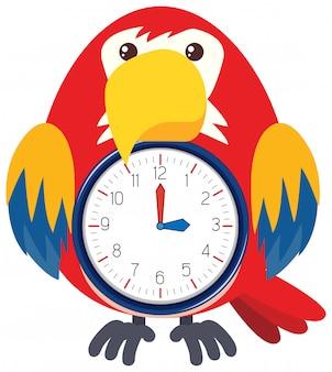 A bird clock on white background