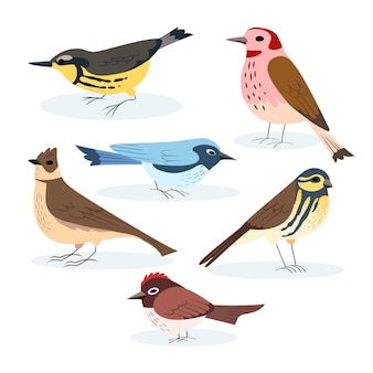 Bird collection drawing