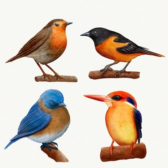 Collezione di uccelli