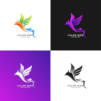 Bird logo template with gradient color