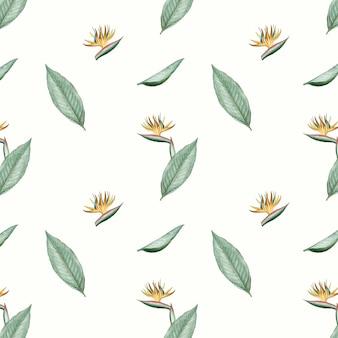 Bird of paradise flower illustration