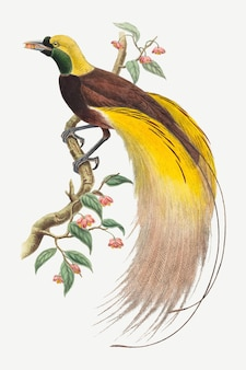 Bird of paradise vector animal art print, remixed from artworks by john gould and william matthew hart