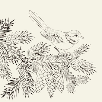Bird on pine fir with pinecone