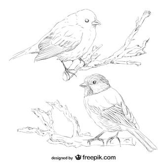 Bird retro hand drawn vector Free Vector