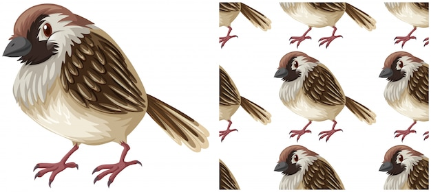 Bird seamless pattern isolated on white