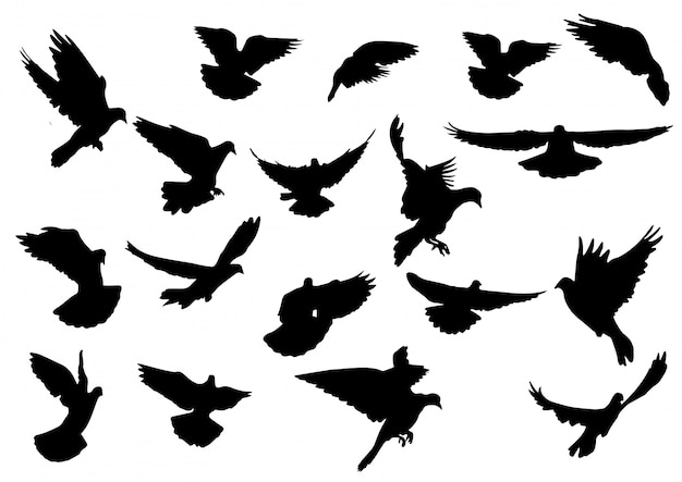 Силуэт птицы, изолированные на белом фоне.