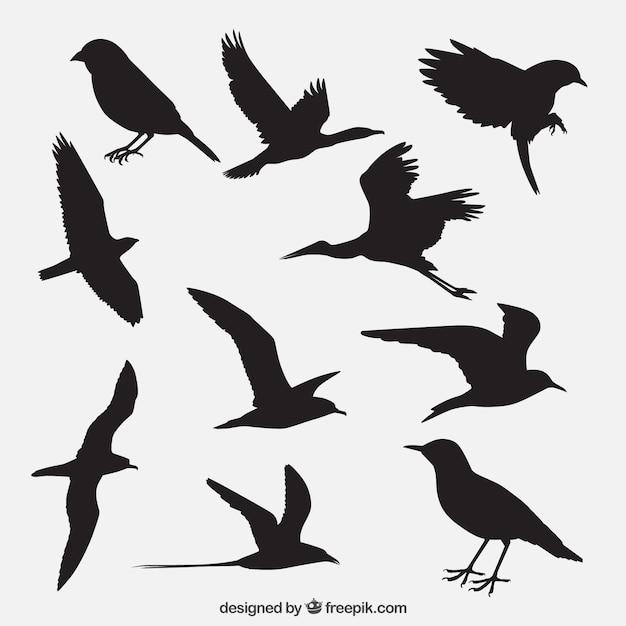 bird vectors photos and psd files free download rh freepik com bird vectors free bird vectors illustrator free