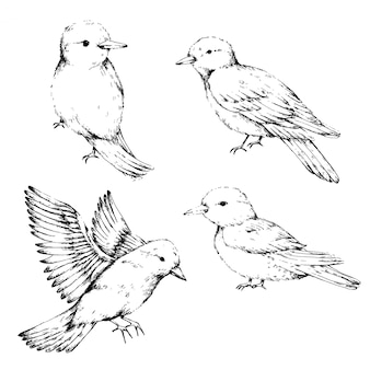 Bird sketch art collection