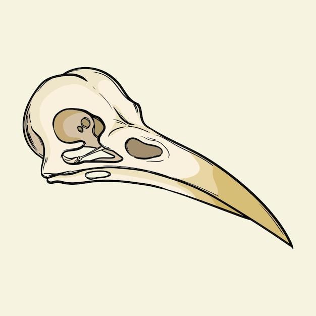 鳥の頭蓋骨の魔法の属性背景に分離された手描きのベクトル図