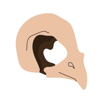 새 skull.witchcraft 마법의 디자인 요소입니다. 벡터 손으로 그린 만화 그림입니다.
