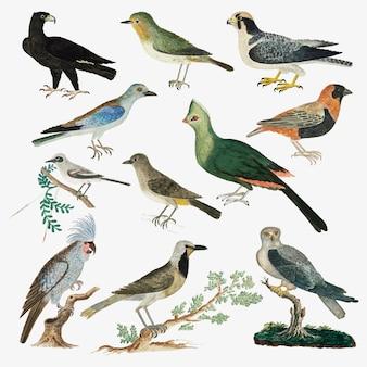 Collezione di uccelli vettoriali antica illustrazione di animali ad acquerello, remixata dalle opere di robert jacob gordon