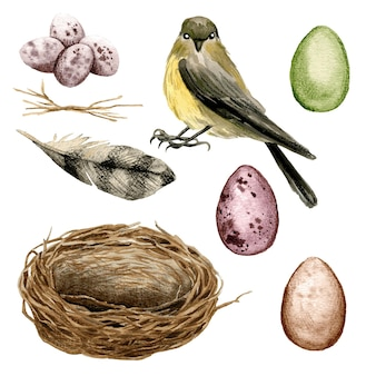 Bird with a nest and eggs illustration design