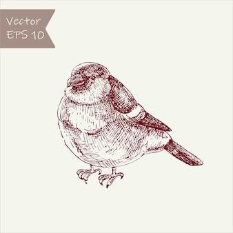 鳥ウソ。ヴィンテージ手描き鳥。刻まれたスタイル。