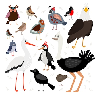Birds collection isolated