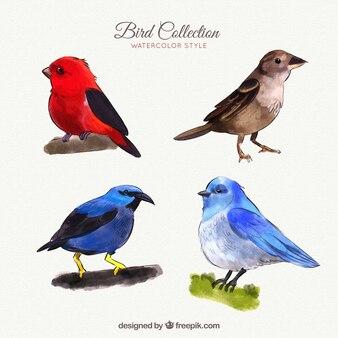 Collezione di uccelli in stile acquerello