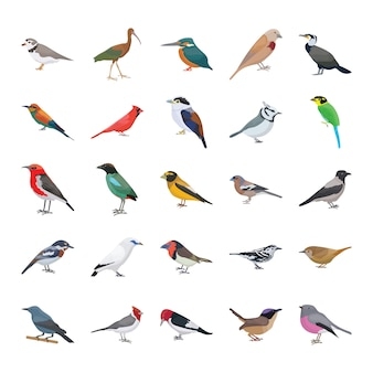 Birds flat vector icons collection