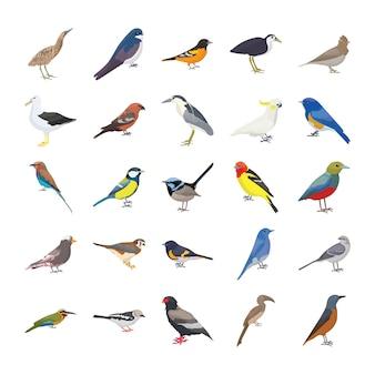Birds flat vector icons set