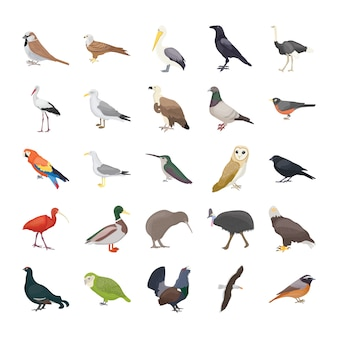 Birds flat vector icons
