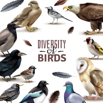 Cornice di uccelli con immagini colorate di uccelli realistici con varie specie che circondano testo ornato modificabile