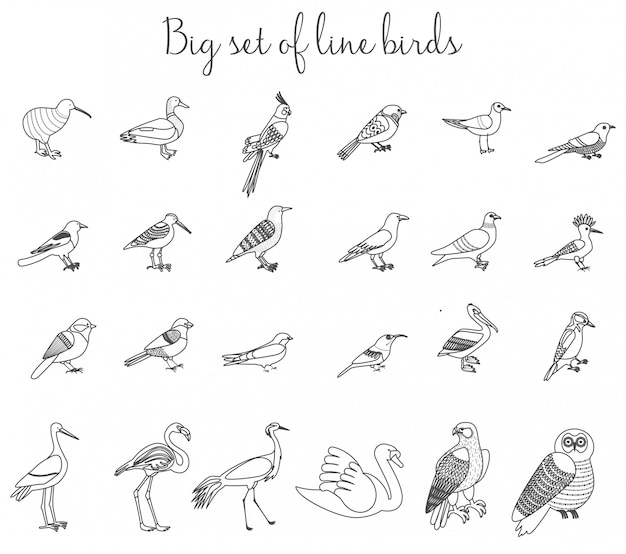 Birds outline thin line illustration icons.