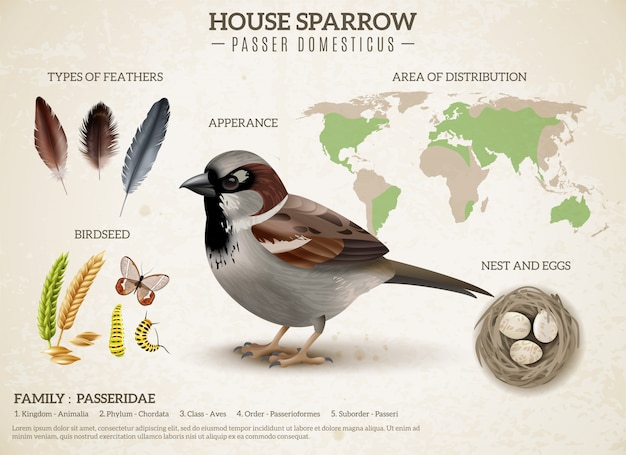 Birds scheme composition with realistic image of sparrow and images of feathers seeds and world map