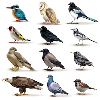 Birds set of twelve isolated images of colourful birds with different species on blank