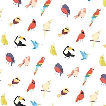 Birds species animals composition Premium Vector