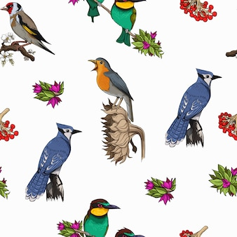 Birds species pattern bright colorful template vector