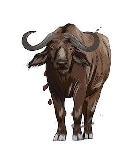 Бизон-буйвол из всплеска акварельного цветного рисунка векторная иллюстрация красок