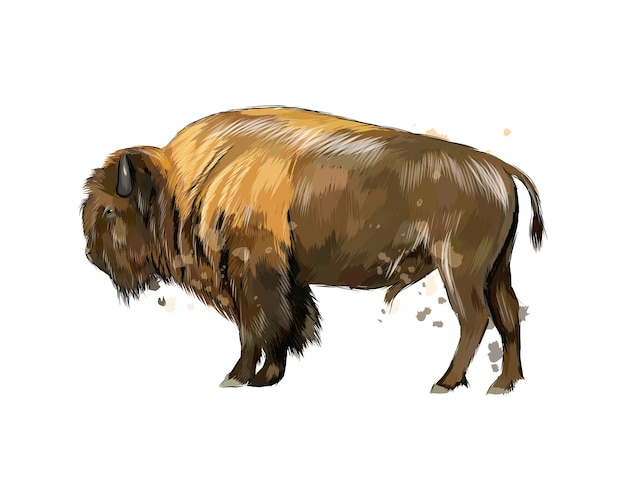 Bison, buffalo from a splash of watercolor