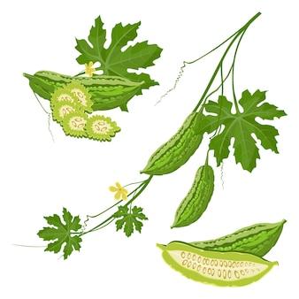 브런치에 녹색 잎과 꽃을 곁들인 비터 멜론