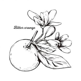 苦いセビリアサワービガラドマーマレードオレンジの柑橘類の木柑橘類aurantiumの葉と紫色の花。エキゾチックなトロピカルフルーツ、エッセンシャルオイル、香料や溶剤のデジタルアートイラスト。