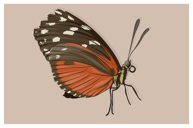 Черные и оранжевые крылатые бабочки