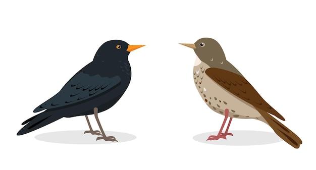 Черный и пятнистый дрозд различные виды дроздов птиц изолированы