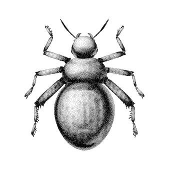 Черно-белый абстрактный жук, нарисованный вручную в стиле винтажных офортов