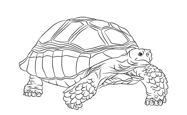 흑인과 백인 귀여운 만화 sulcata 거북이.