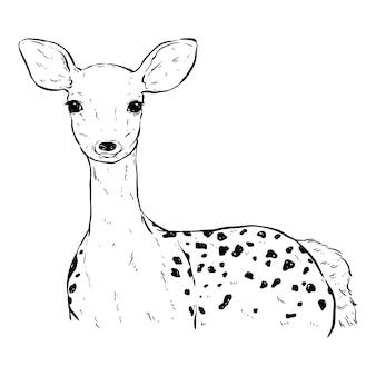 손으로 그리는 또는 스케치 스타일의 흑백 귀여운 사슴
