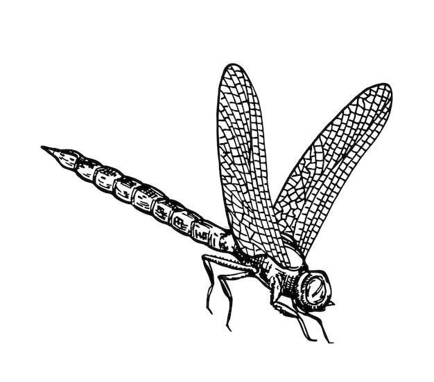 Черно-белая стрекоза с нежными крыльями эскиз векторные иллюстрации тушью стрекоза
