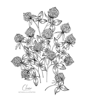 클로버의 흑백 벡터 스케치 그림 청첩장 인사말 카드 포장지 화장품 포장 레이블 태그 따옴표 포스터에 대 한 모든 요소 격리 된 디자인 요소