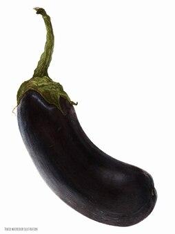 Черный баклажан, ботаническая реалистичная акварель