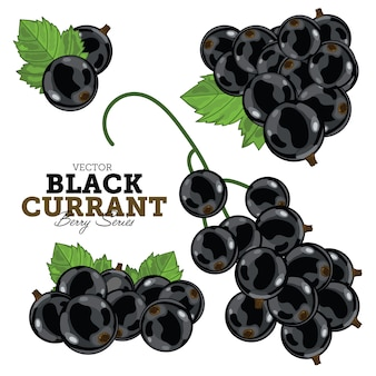 Набор из черной смородины