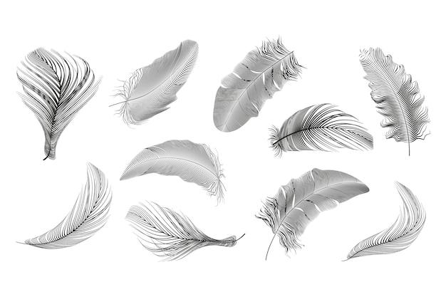 白い背景に設定された黒い羽のコレクション。