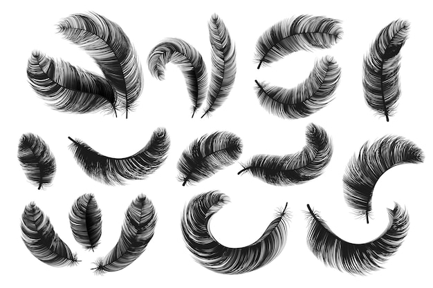Black feathers. realistic fluffy swan feathers, vintage isolated quill silhouettes, vector angel or bird twirled feathers