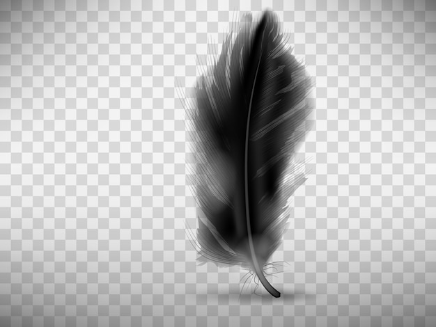 Black fluffy feather with shadow realistic