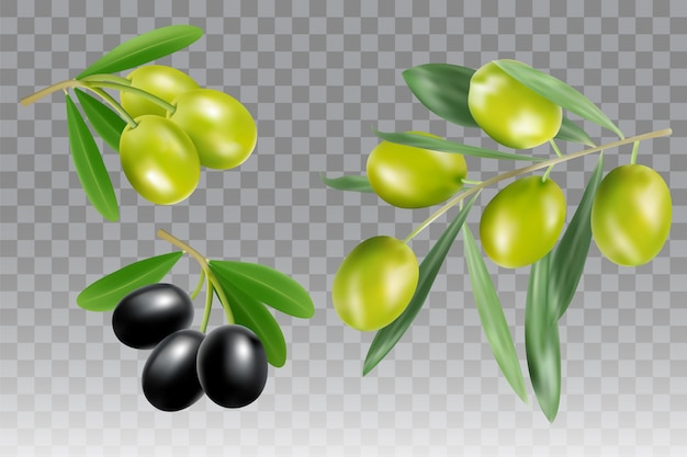 Black and green olive branch vector isolated