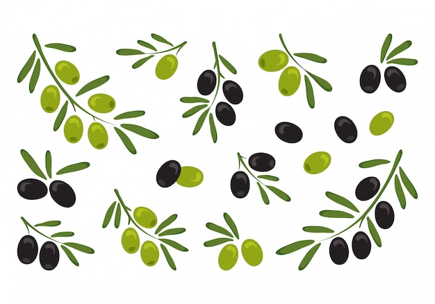 Black and green olives, branch olives with leaves. vector illustration