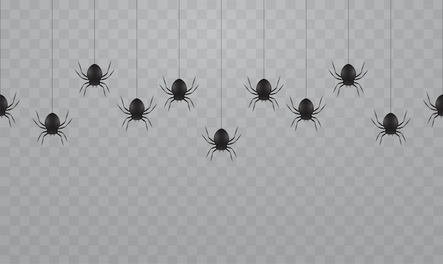 透明な背景に黒のハンギングスパイダー。ハロウィーンのクモの巣に怖いクモ。