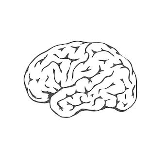 白い背景で隔離の黒い人間の脳。人間の脳の側面図。メンタルヘルス月間。知性と知恵の象徴。ベクトルイラスト。 eps10。